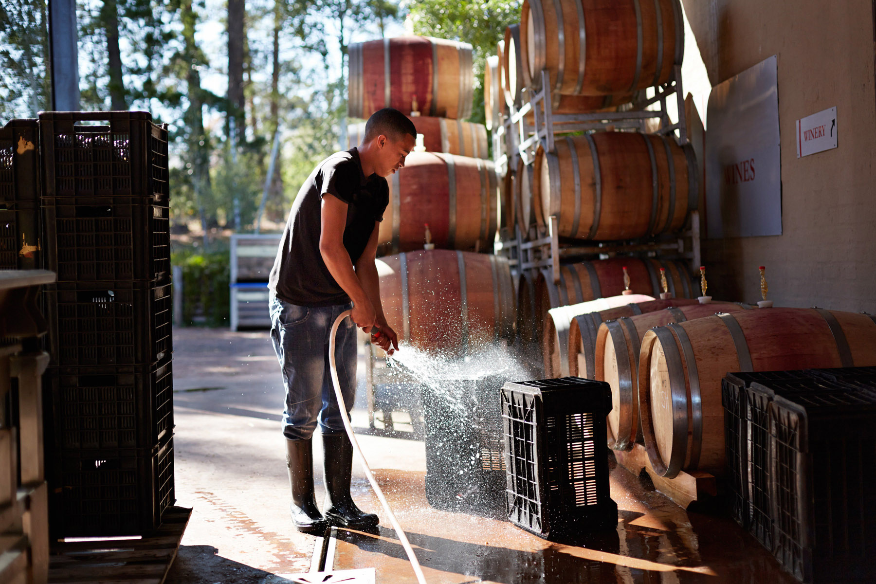 Man washing grape boxes at winery